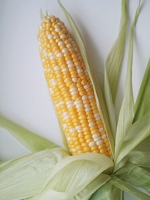bi color corn